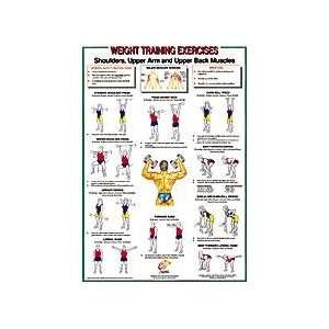 Shoulders Upper Arm/Back Muscles Chart: Sports & Outdoors