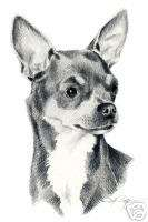 CHIHUAHUA Dog Drawing ART NOTE CARDS by Artist DJR