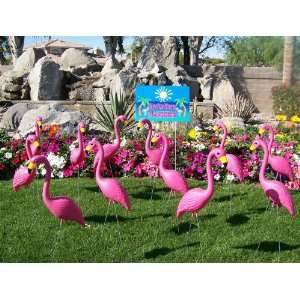 Pink Yard Flamingos + Get a Free Youve Been Flocked Pink Flamingo