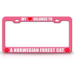 MY HEART BELONGS TO A NORWEGIAN FOREST Cat Pet Auto License Plate