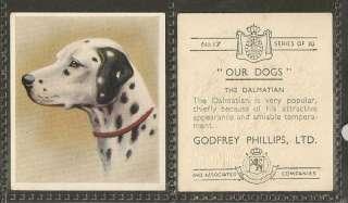 1939 UK Our Dogs Dog Art Godfrey Phillips Cigarette Card Black & White