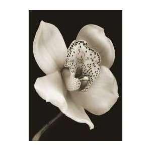 Art Poster Print   White & Black Speckled Flower   Artist