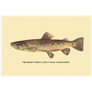 Brown Trout by George Sheringham . Art PRINT Poster 18.00