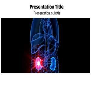 Kidney Powerpoint Template   Kidney Powerpoint (PPT) Presentation