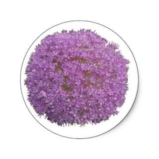Purple Allium Flower Head Round Stickers from Zazzle